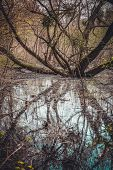 stock photo of swamps  - branched tree growing in a swamp with yellow flowers in spring - JPG