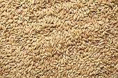 picture of malt  - Pile of barley malt grain forming a uniform background texture - JPG