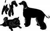 pic of greyhounds  - collection of animal dogs greyhound and fox terrier vector silhouette - JPG