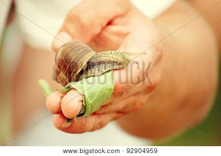 Snail on hand
