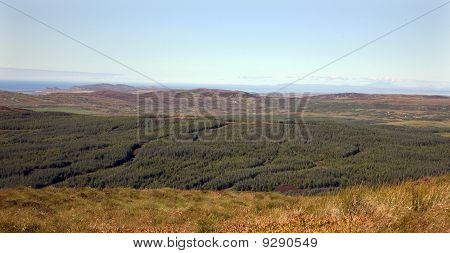 Islay Forest