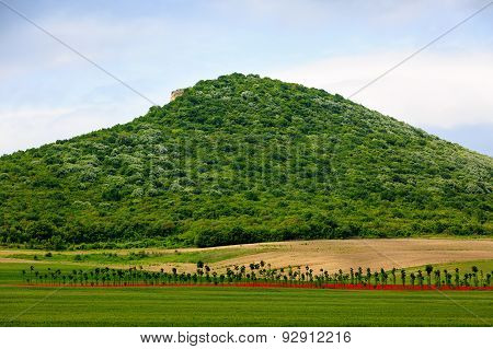 Plantation Of Trees On A Hill