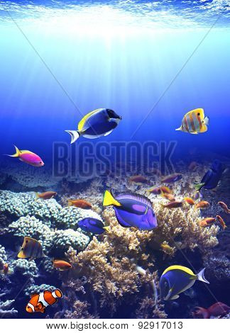 Underwater scene with beautiful tropical fish