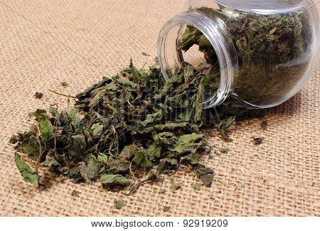 Dried Nettle Pouring Out Of Glass Jar
