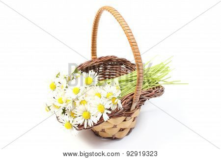 Daisies In Wicker Basket. White Background