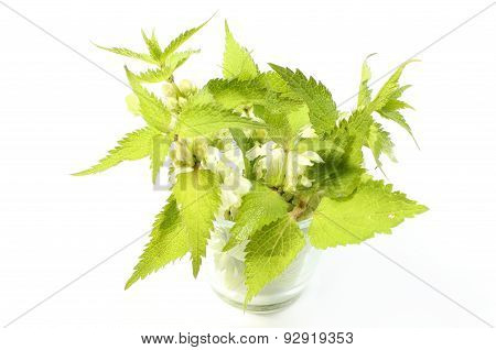 Fresh Nettles With White Flowers In Glass Cup