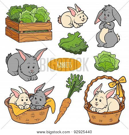 Color Set Of Cute Farm Animals And Objects, Vector Family Rabbits