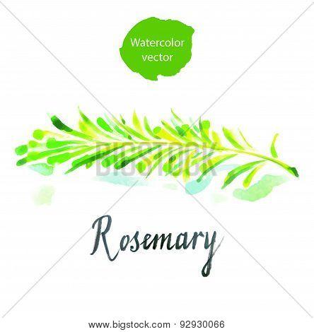 Twig of rosemary