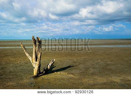 Lonely Dead Tree On Beach