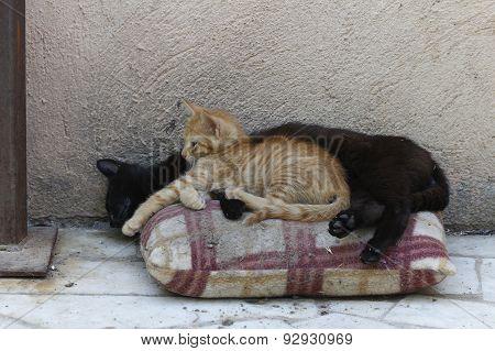 Cat mom sleeping with kitten.
