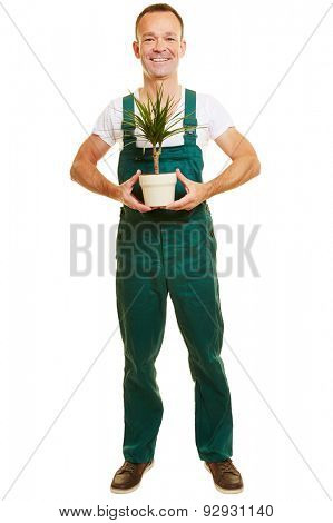 Isolated full body gardener with green overalls and a Beaucarnea plant