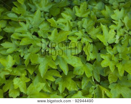 The Leaves Of The Bush Green.