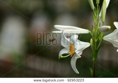 Flower And Bees On A Blur Background