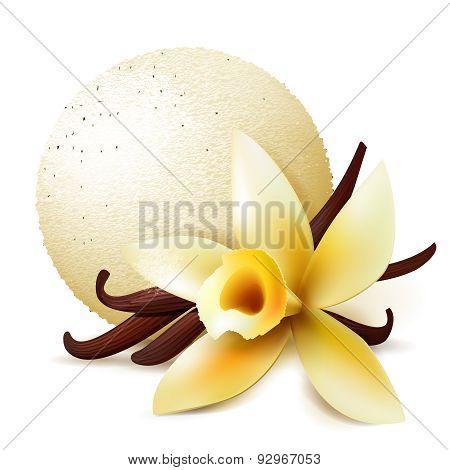 Scoop Ice Cream With Vanilla Flavor