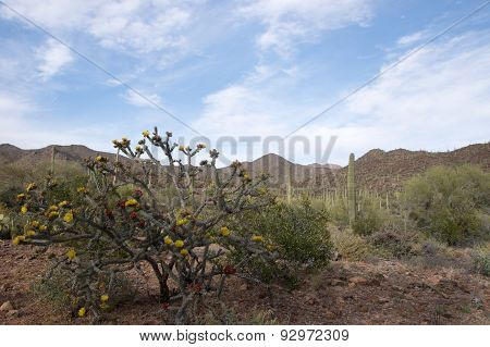 Saguaro National Park, Arizona, Usa