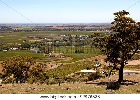 Barossa Vineyards Landscape