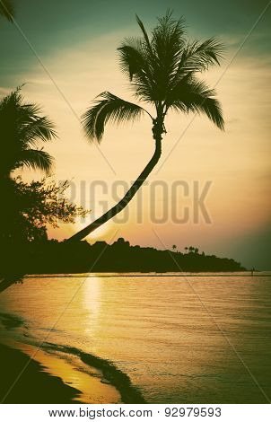 Sunset beach with palm tree