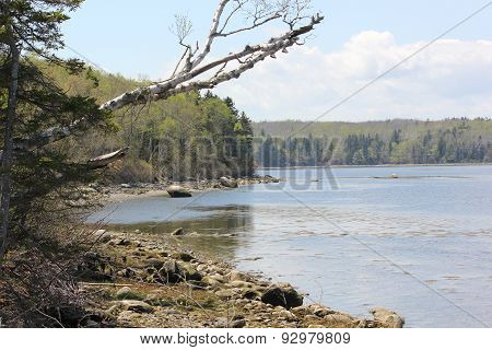Penobscot River Tidal Basin near  Fort Point Lighthouse State park in Maine