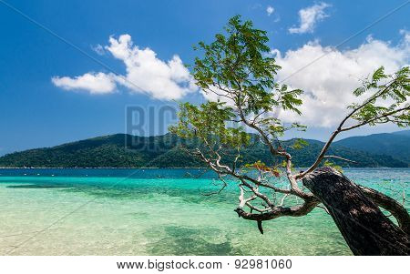 Tropical Trees Hang Over A Sandy White Beach With Stunning Blue Water