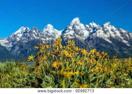 Flowers Of  Grand Tetons