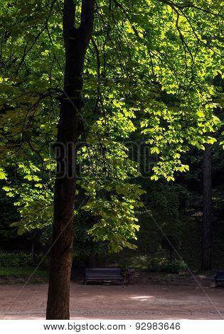 Summer Park Kislovodsk