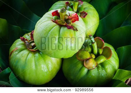 Fresh Garcinia Cambogia On leaf (thai Herb)