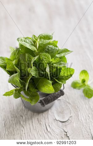 Fresh Mint In Vintage Bucket On A Light Wooden Surface
