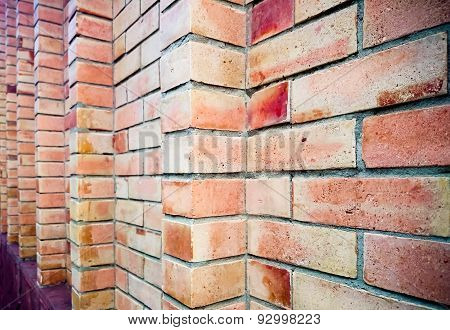 Red brick wall in a background. Outdoor view