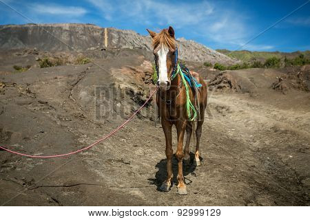 Horse for tourists rent at Mount Bromo volcanoes in Bromo Tengger Semeru National Park