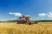 picture of combine  - Modern combine harvester is working on oats farm field under blue sky in hot summer day - JPG