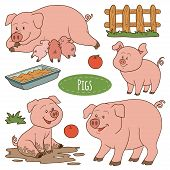 pic of baby pig  - Set of cute farm animals and objects vector family pigs - JPG