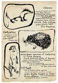 stock photo of badger  - An hand drawn illustration placard  - JPG