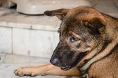 stock photo of mongrel dog  - Homeless brown thai dog sit on the floor - JPG