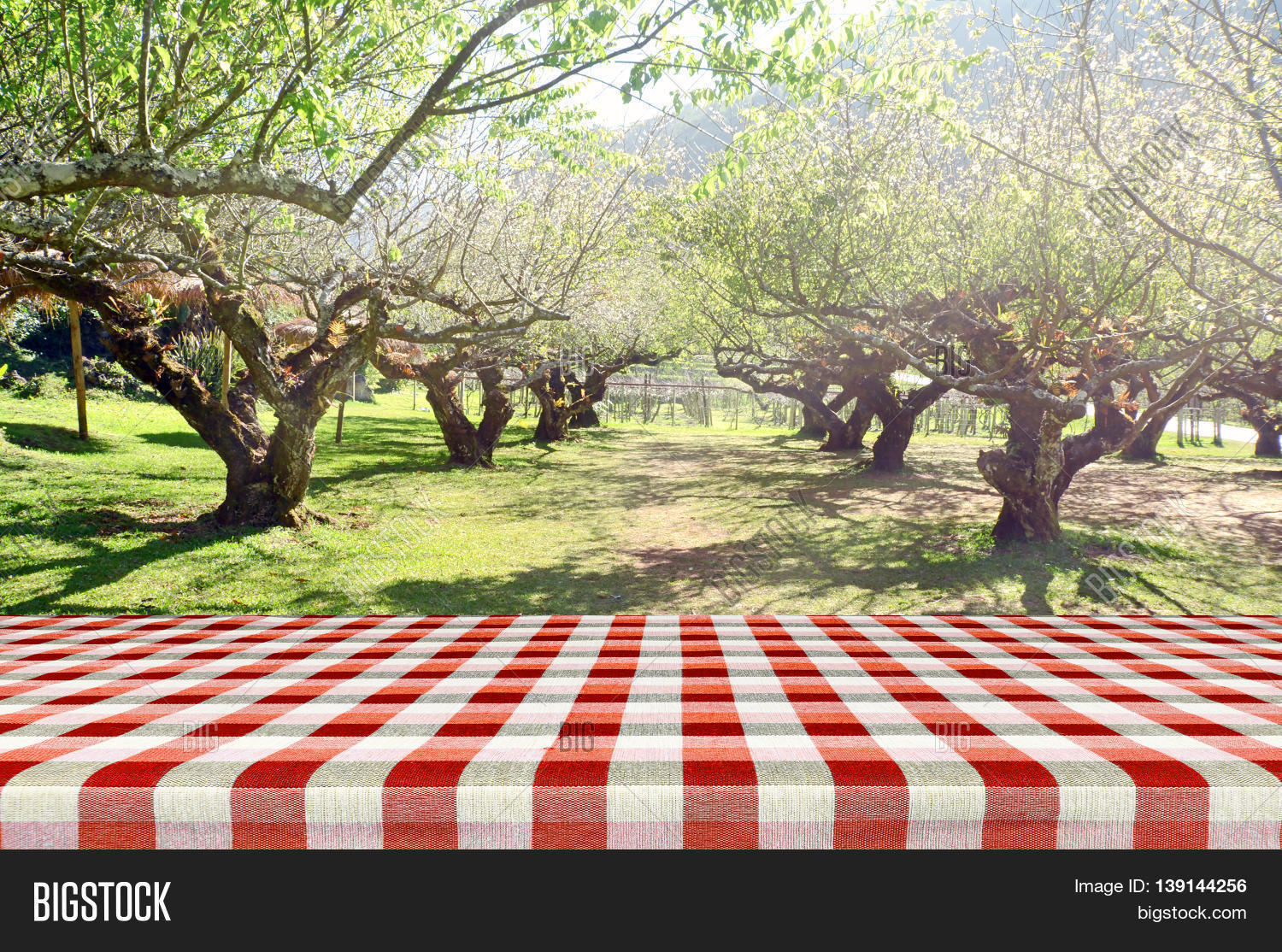 Outdoor Picnic Background In Summer Sun Light. Stock Photo ...