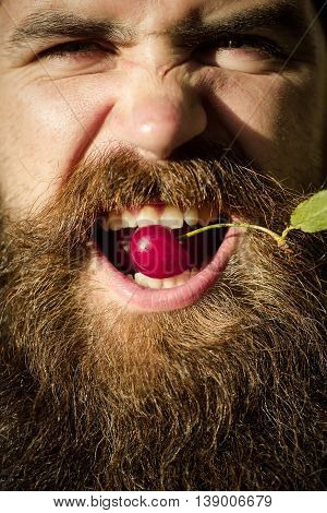 Bearded Man With Red Cherry