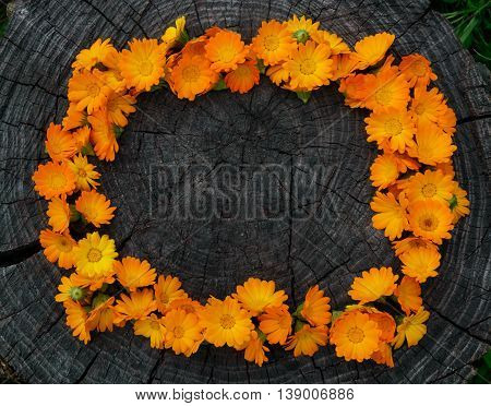 Calendula Flowers on wooden stump in a frame. Medicinal plant