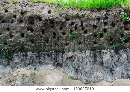 House steppe birds - holes in the steep bank of the river