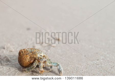 the Hermit crab walking along the beach
