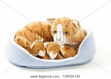 Stuffed animals cat family nest isolated over white background