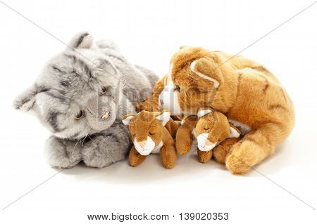 Stuffed animals cat family isolated over white background