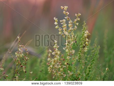 Wild meadow grass on blurred nature background