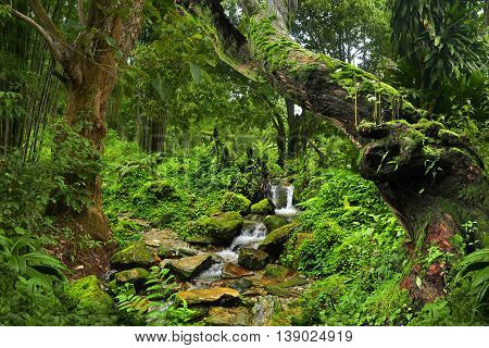 tropical jungle with small stream in northern thailand