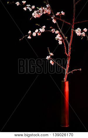 Blooming apricot in the artillery shell symbolizes the call for peace
