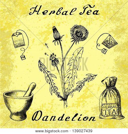 Dandelion hand drawn sketch botanical illustration. Vector drawing. Herbal tea elements - tea bag bag mortar and pestle. Medical herbs. Lettering in English languages. Grunge background