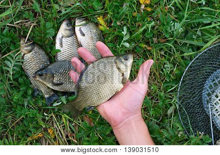 crucian fisherman in hand against other crucians on grass