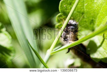 Caterpillar crawling on green stem close-up selective focus macro shot