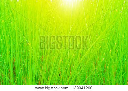 Green meadow and light background nature wallpaper