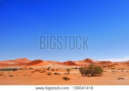 Beautiful landscape with red dunes at sunrise Sossusvlei Namib Naukluft National Park Namibia Africa