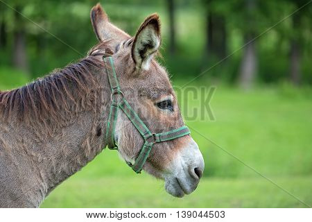 Donkey in a clearing, a portrait in the wild
