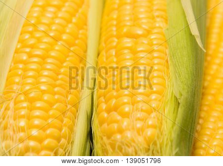 Young corn cob close up corn grain